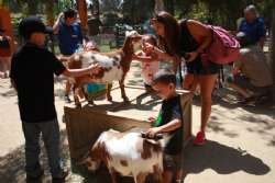 All ages with goats